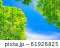 新緑と青空 【長野県】 61926825