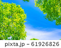 新緑と青空 【長野県】 61926826