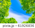 新緑と青空 【長野県】 61926836
