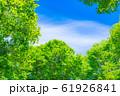 新緑と青空 【長野県】 61926841