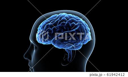 脳 頭脳 ブレイン 頭 あたま ヘッド マインド アイデア 3Dイラスト CG 61942412