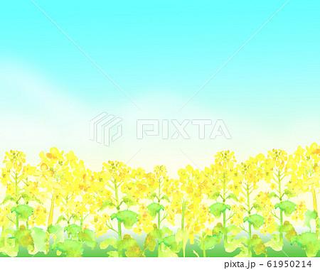菜の花 菜の花畑 背景 イラスト 水彩 手描き  61950214