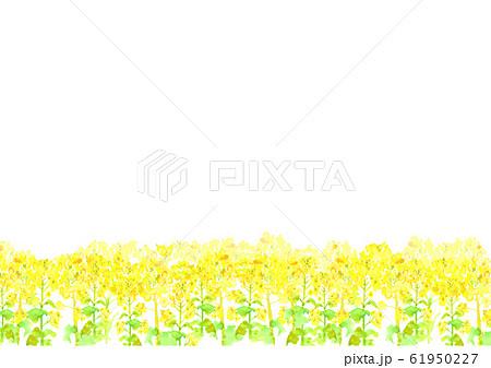 菜の花 菜の花畑 背景 イラスト 水彩 手描き  61950227