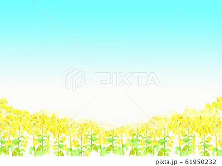 菜の花 菜の花畑 背景 イラスト 水彩 手描き  61950232