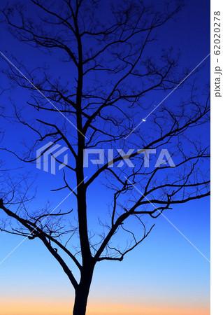 冬の天体ランデブー 62020278