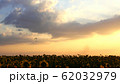 Paraglider flying against sky over sunflower field 62032979