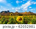 sunflower at Kao Jeen Lae mountain in Lopburi, 62032981