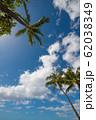 ハワイ ワイキキ 椰子の木と青空 perming 写真素材 62038349