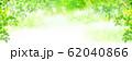 新緑 葉 緑 背景 62040866