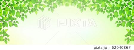 新緑 葉 緑 背景 62040867