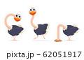 ostrich 62051917