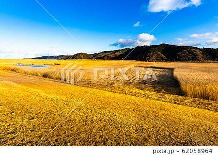 北上川黄金色ヨシ原のヨシ刈り 62058964