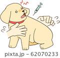 ゴールデンレトリバーの子犬(注射2) 62070233