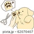 ゴールデンレトリバーの子犬(足の毛カット) 62070407