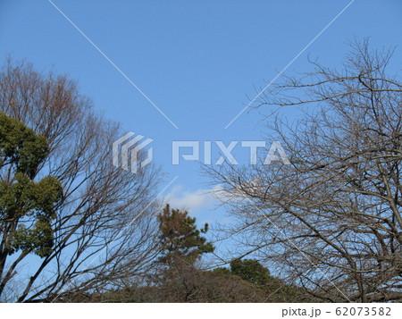 上野東照宮ぼたん苑の冬の樹木の姿 62073582