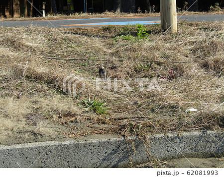 天王崎でツグミの写真が撮れました 62081993
