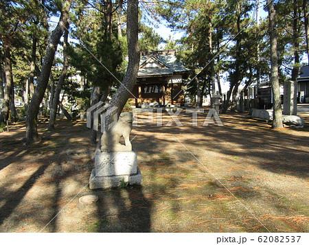 天王崎八坂神社の松林 62082537