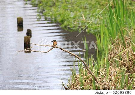 カワセミがいる川筋の風景 62098896