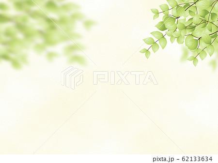背景 緑の木々 62133634