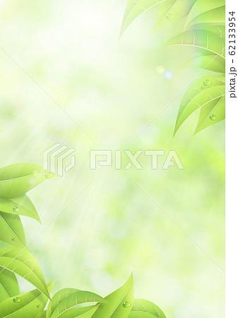 新緑-葉-グリーン-逆光-さわやか-フレア-サンライト 62133954
