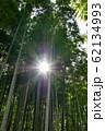 光条差込む竹林 62134993