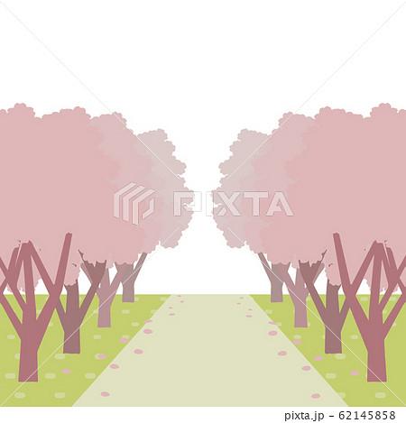 桜並木の風景 イラスト 62145858
