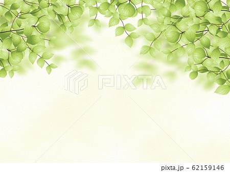 背景 緑の木々 62159146