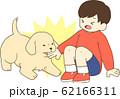 ゴールデンレトリバーの子犬(人間の子供が子犬に手を噛まれる) 62166311