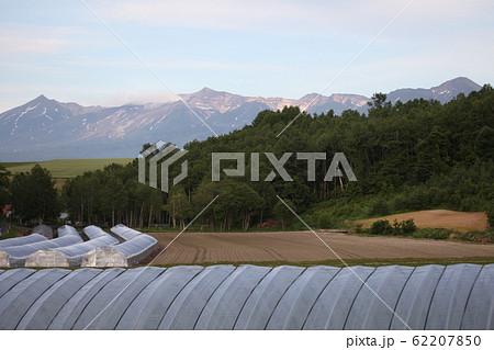 ビニールハウスと十勝岳連峰 62207850