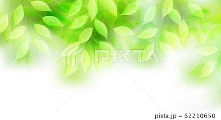 新緑 葉 緑 背景 62210650