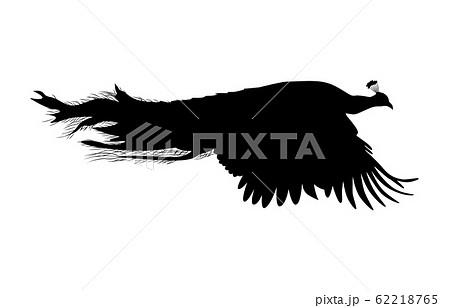 動物シルエット鳥クジャク3 62218765