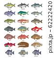 海水魚 イラスト(カラー2) ドット絵 62222420