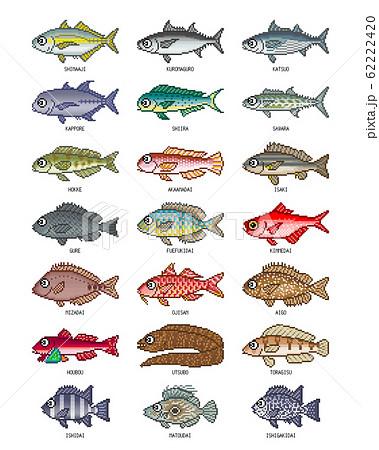 海水魚 イラスト(カラー2) ドット絵のイラスト素材 [62222420] - PIXTA