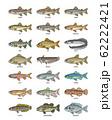 淡水魚 イラスト(カラー) ドット絵 62222421
