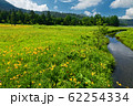 ニッコウキスゲ咲く尾瀬・大江湿原 62254334