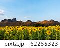 sunflower at Kao Jeen Lae mountain in Lopburi, 62255323