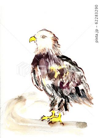 動物園の鷲 62283290
