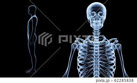人体 骨 メディカル 人間 体 医療 医学 科学 頭蓋骨 レントゲン 3D イラスト CG 背景 62285838