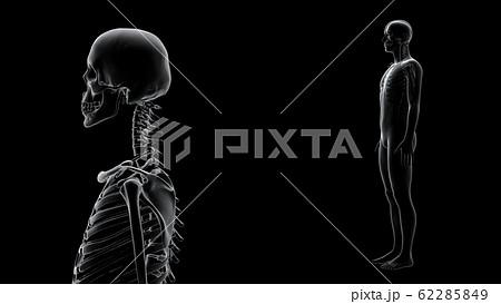 人体 骨 メディカル 人間 体 医療 医学 科学 頭蓋骨 レントゲン 3D イラスト CG 背景 62285849