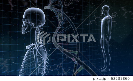 人体 骨 メディカル 人間 体 医療 医学 科学 頭蓋骨 レントゲン 3D イラスト CG 背景 62285860