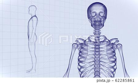 人体 骨 メディカル 人間 体 医療 医学 科学 頭蓋骨 レントゲン 3D イラスト CG 背景 62285861