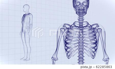 人体 骨 メディカル 人間 体 医療 医学 科学 頭蓋骨 レントゲン 3D イラスト CG 背景 62285863
