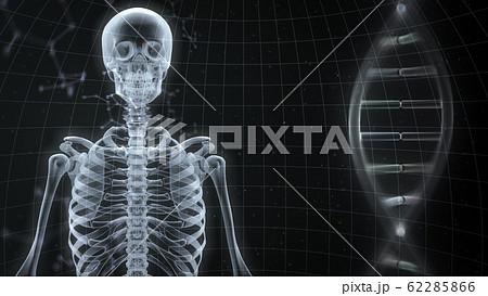 人体 骨 メディカル 人間 体 医療 医学 科学 頭蓋骨 レントゲン 3D イラスト CG 背景 62285866