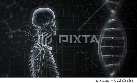 人体 骨 メディカル 人間 体 医療 医学 科学 頭蓋骨 レントゲン 3D イラスト CG 背景 62285868