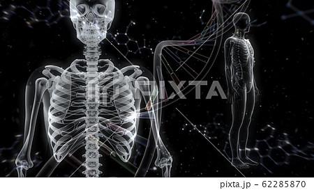 人体 骨 メディカル 人間 体 医療 医学 科学 頭蓋骨 レントゲン 3D イラスト CG 背景 62285870