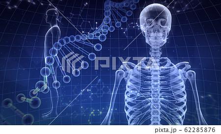 人体 骨 メディカル 人間 体 医療 医学 科学 頭蓋骨 レントゲン 3D イラスト CG 背景 62285876