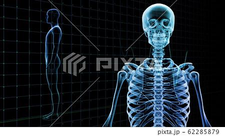 人体 骨 メディカル 人間 体 医療 医学 科学 頭蓋骨 レントゲン 3D イラスト CG 背景 62285879