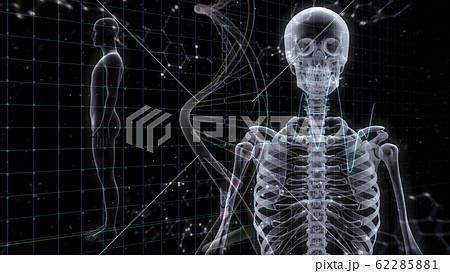 人体 骨 メディカル 人間 体 医療 医学 科学 頭蓋骨 レントゲン 3D イラスト CG 背景 62285881