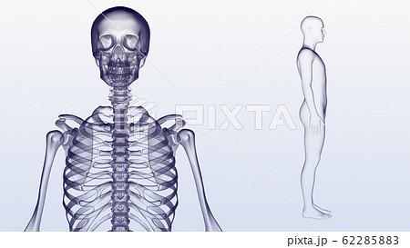 人体 骨 メディカル 人間 体 医療 医学 科学 頭蓋骨 レントゲン 3D イラスト CG 背景 62285883