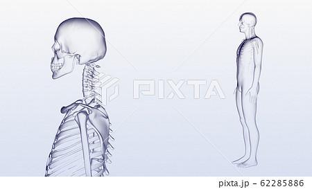 人体 骨 メディカル 人間 体 医療 医学 科学 頭蓋骨 レントゲン 3D イラスト CG 背景 62285886